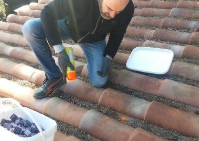 Dératisation par les toits